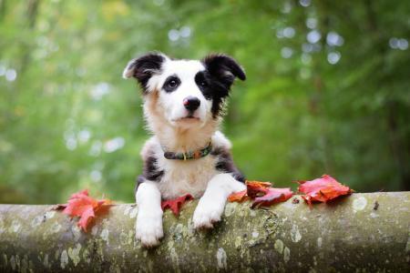 动物,狗,狗,日志,叶子,秋天