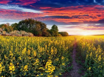 性质,油菜,径,天空,云,日落,乌克兰,树,领域