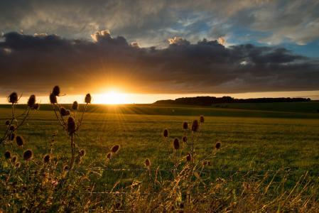 天空别致,天空,日落,太阳,云,领域,美女,草