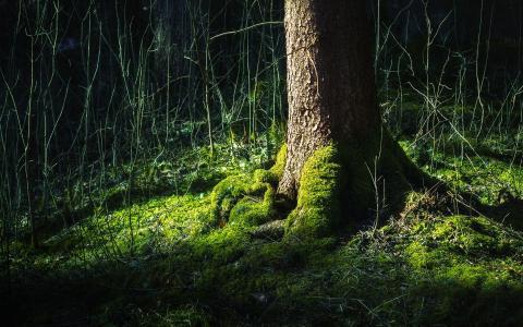 大腿,绿色,森林,根,树