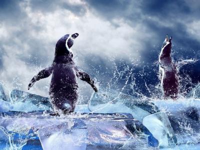 企鹅,海,冰,水