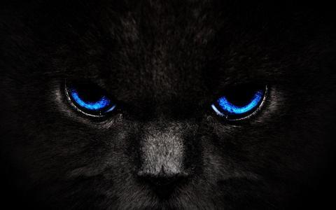 猫,猫,捕食者,黑暗的背景,眼睛