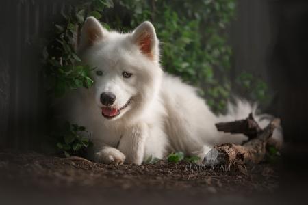 动物,狗,狗,性质,分支机构,叶子,断枝