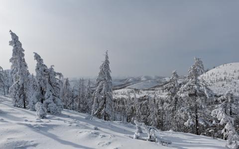 落叶松,山口,雪