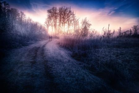 处理,道路,草,在黎明,天空
