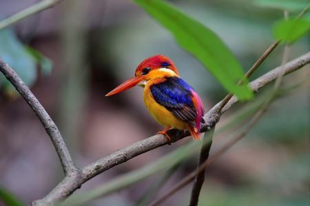 自然,世界的鸟,鸟,翠鸟,分支