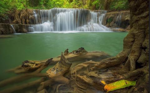 茂密,森林,瀑布,溪流,美景,根