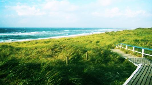 风弯曲的草地,通往水的路径,海浪