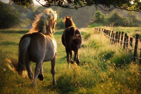 夏天,自由,马,性质