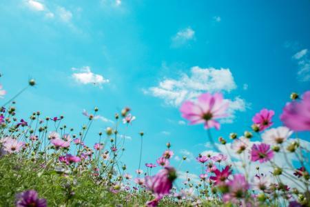 天空下美丽的花海