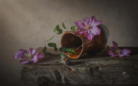 Inna Sukhova,水罐,分支,花卉,铁线莲,蜗牛,板