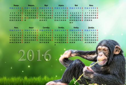 日历,2016年,猴子