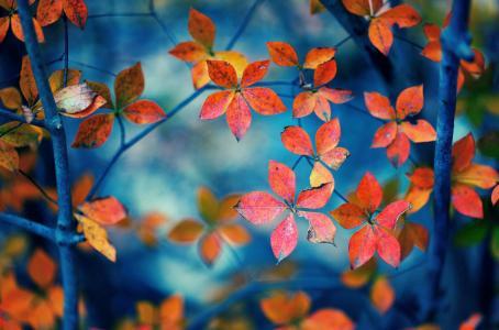 宏,叶,叶子,叶子,形状,分支机构,橙色,背景,壁纸,宽屏,全屏,宽屏,高清壁纸,背景,壁纸,宽屏,全屏,宽屏