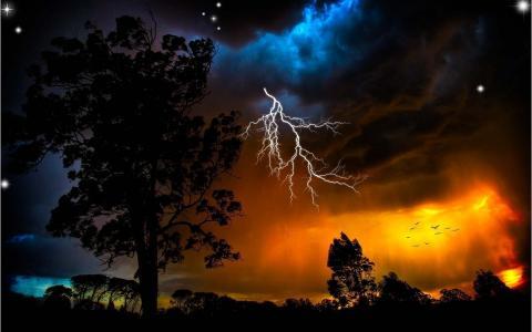 雷雨,树木,闪电