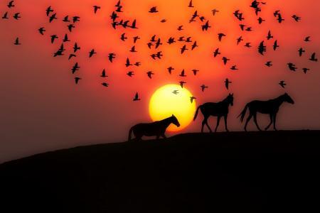 日落,鸟,马,剪影,3d图形