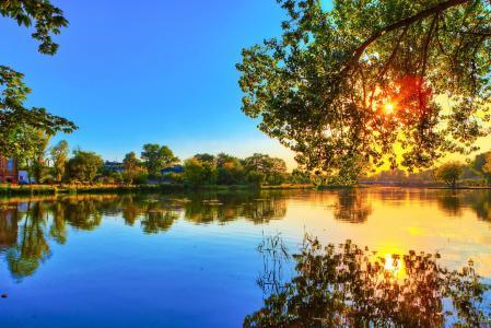 森林,表面,反射,水,河,树木
