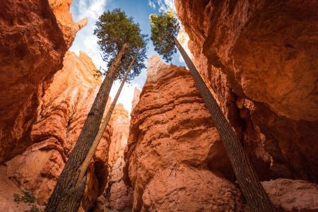 美国,尤塔,峡谷,布莱斯峡谷国家公园,高,树,天空,岩石,安德鲁史密斯