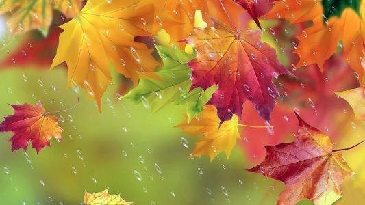 秋天,枫树