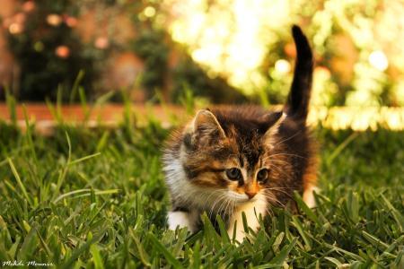 小猫,草,研究员