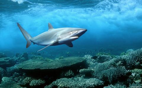 自然,波,水下,深度,鲨鱼,珊瑚