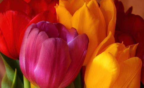 黄色,明亮,粉红色,郁金香,花束,鲜花