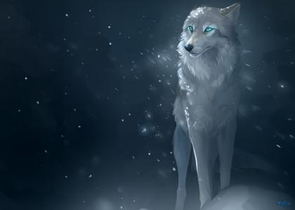 白狼,冬天,雪,夜,风