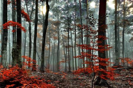 自然,秋天,森林,树木,雾,叶子