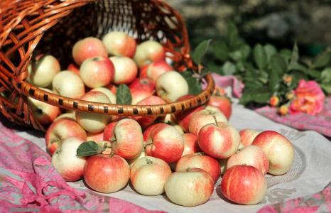 食品,苹果,苹果,篮,篮,苹果,壁纸,宽屏,全屏,宽屏,高清壁纸,背景,壁纸,宽屏,全屏,宽屏