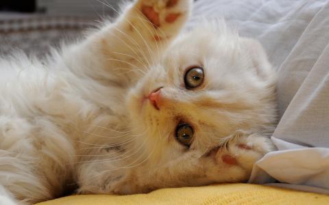 小猫的爪子