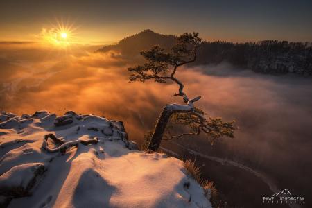 山奇迹,松,悬崖,雪,山,雾,太阳,光,Pawel Uchorczak