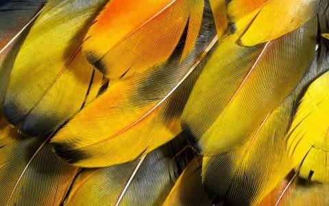 羽毛,特写,1920х1200,壁纸