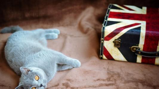 猫,手提箱,心情