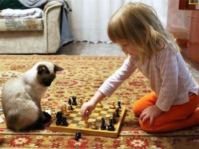孩子,女孩,猫,暹罗猫,儿童,动物,搞笑,幽默,头脑,国际象棋,游戏,地毯,房间,窗帘,看