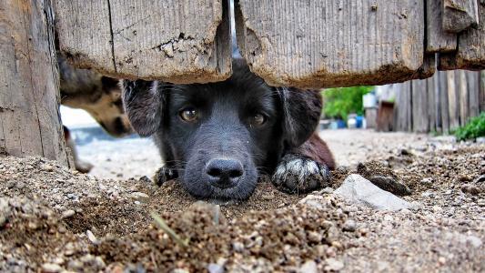 狗,别放过...