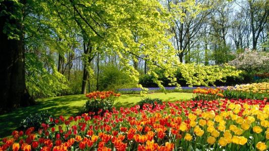 春天,公园,性质,郁金香,鲜花,美丽