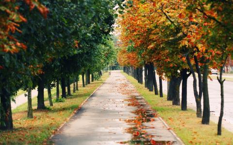 风景,自然,心情,心情,公园,树,路,路径,行人路,胡同,途径,秋,秋季壁纸