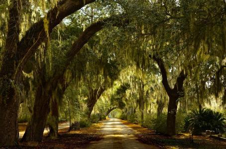 路,树,绿化,胡同,美,夏天