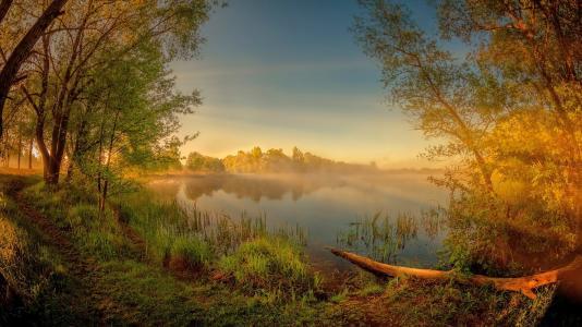 黎明,树木,河流,muhavets,白俄罗斯