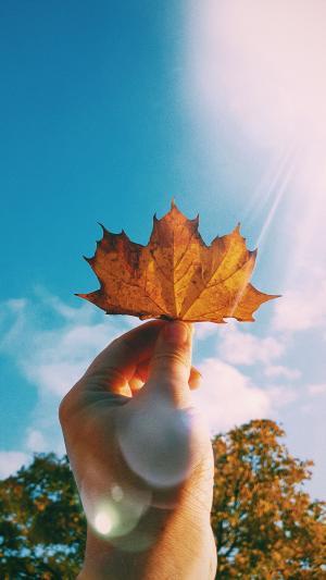 一片秋天的落叶