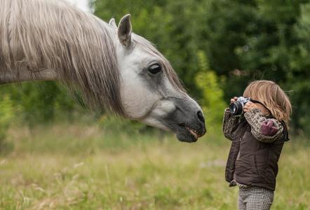马,枪口,鬃毛,男孩,摄影师,狗仔队,相机