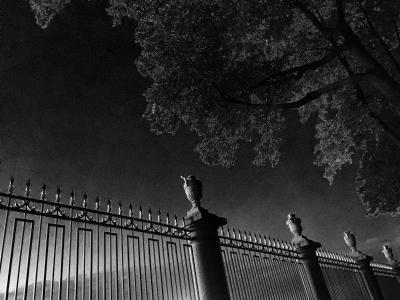 晚上,黑色和白色,篱笆