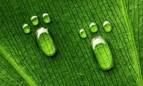 绿色,滴,叶,条纹,爪子