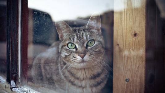 猫,窗户,看