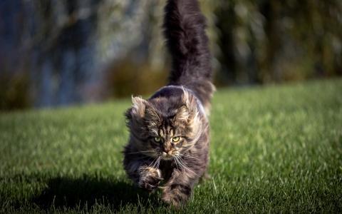 猫,背景,字段
