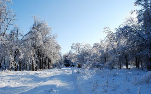 天空,路,森林,冬季,树木