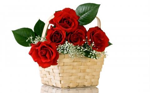 鲜花,花束,玫瑰,红,性质,花卉,篮子