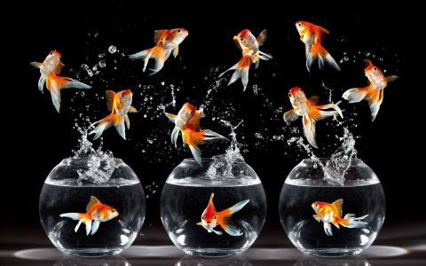 金鱼,跳跃