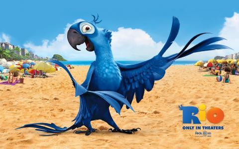 鸟,里约热内卢,里约,卡通,鹦鹉