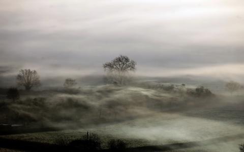 雾,领域,景观,夜