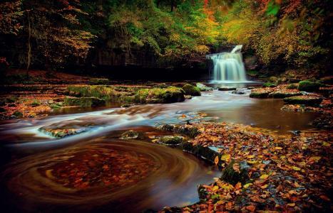 秋天,森林,河,瀑布,森林,黄色背景,瀑布,水,河,美丽